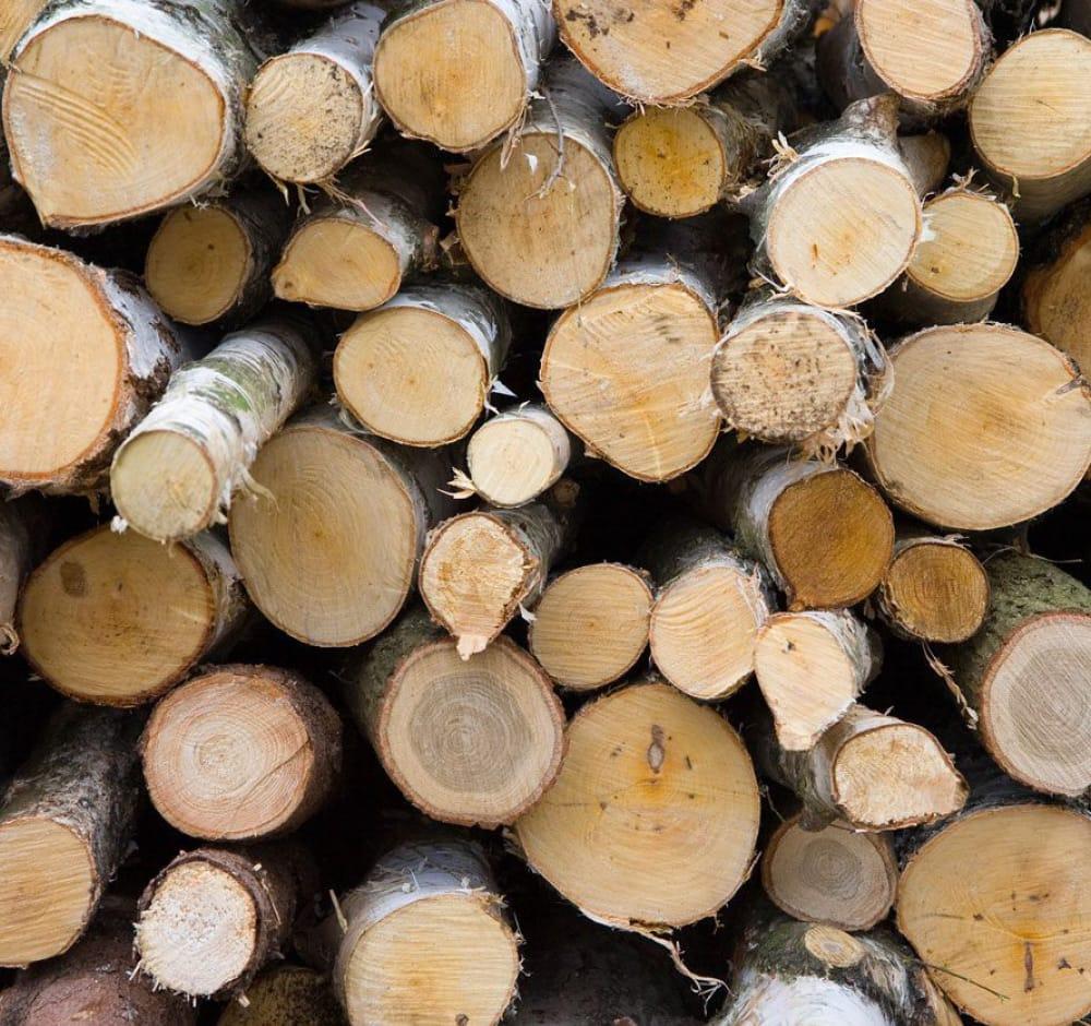 carta-cartone-legno